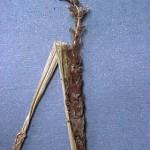 Ustilago nuda f.sp. hordei Schaffnit, Angew.; Carbón volador de la cebada