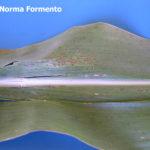 07 Mancha ocular, causada por Kabatiella zeae en maíz. Victoria, Entre Ríos,  2012. Autor: Ing. Angela Norma Formento.