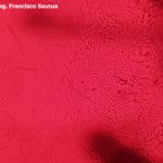 07 Conidios de Septoria glycines. Autor: Ing. Francisco Sautua.