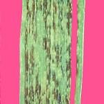 Xanthomonas campestris pv. undulosa (syn. translucens); Espiga negra o rayado bacteriano