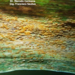 36 Uredosoros con uredosporas de Pst en hojas de trigo. Fontezuela, Bs. As., 2017/2018, variedad DM Algarrobo.