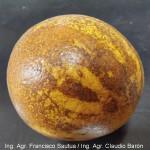 Síntoma en fruto de naranja