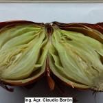 Podredumbre blanda de la cebolla