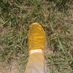 01 Zapato de monitoreador completamente cubierto por uredinosporas de Pst. Autor: Ing. Agr. Heber Adami (Carlos Casares).