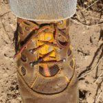 02 01 Uredinosporas de Roya Amarilla adheridas a zapatos de monitoreador. Variedad DM Algarrobo, en Ameghino. Autor: Ing. Mauro Montarini.