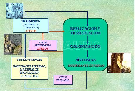 CTV ciclo